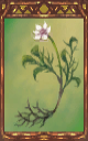 Image of the Nameless Flower Magnus